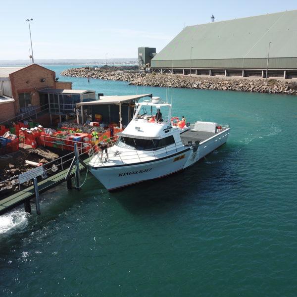 West Australian Octopus - Octopus Fishing Boat