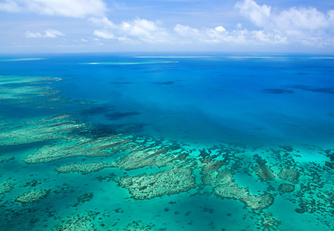 Barrier Reef - West Australian Octopus